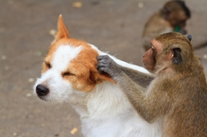 How come animals communicate better with each other than humans in spite of so many languages?
