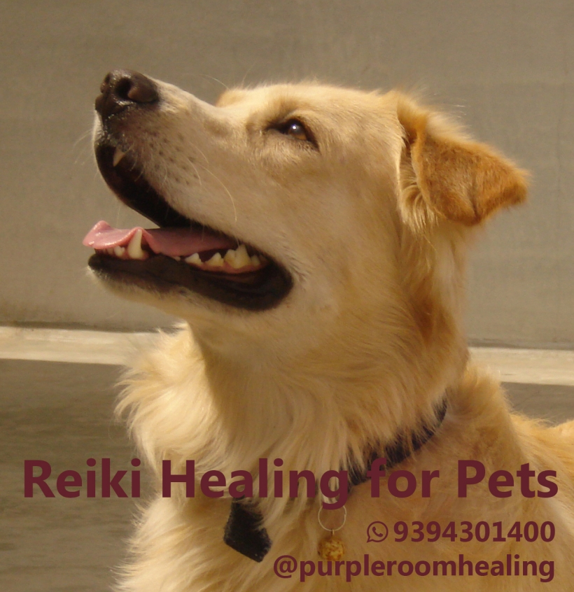 Reiki healing for pets and animals - dog 1